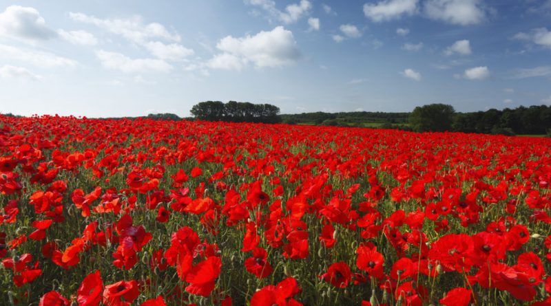 This Remembrance Day marks 100 years since the end of World War One.
